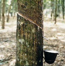 Natural Rubber from Sri Lanka